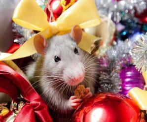 В чем встречать новый 2020 год или стиль белой металлической крысы