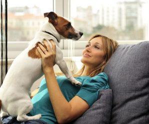 Какую собаку выбрать? Выбираем нового члена семьи.