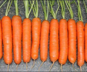 Морковь: польза и вред. Польза моркови для организма.