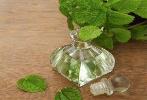 Эфирное масло пачули свойства и применение