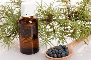 Эфирное масло можжевельника – свойства и применение