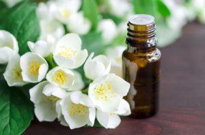 Нежное масло жасмина – свойства и применение