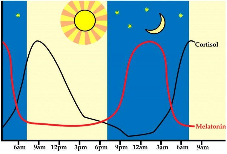 Гормон мелатонин как снотворное поможет победить бессонницу