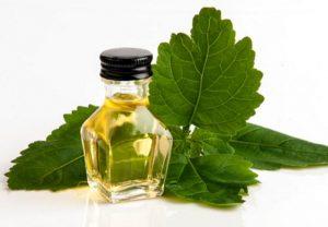 Эфирное масло пачули – чувственный аромат