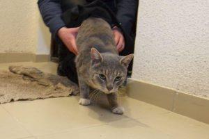 Кошка первая в дом входит — правило новосёлов