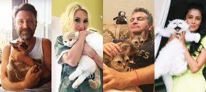 Российские знаменитости и их не менее знаменитые кошки