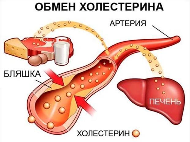 Борьба с холестерином